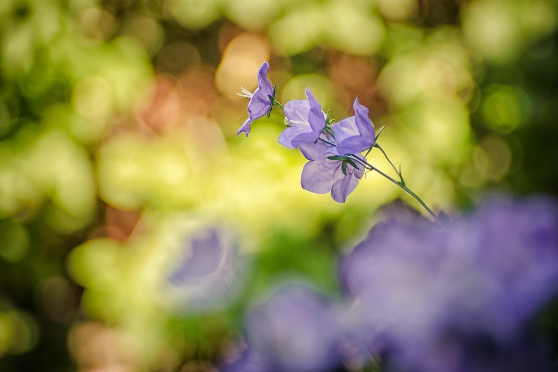 Lille blå blomsy